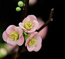 Blossom by Ann J. Sagel