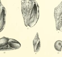 Manual of the New Zealand Mollusca by Henry Sutter 1915 0201 Murex Paryphanta Placostylus Siphonaria Thais Sticker