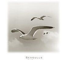 Seagulls by Carlos Casamayor