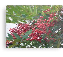 Berry Tree Metal Print