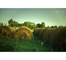 Cow Treats Photographic Print
