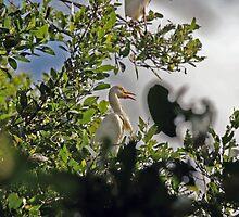 Marsh Bird by Turtle6