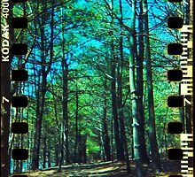 Walden Trees I - Concord, MA by abraxisdesign