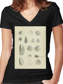 Manual of the New Zealand Mollusca by Henry Sutter 1915 0233 Glycymeris laticostata Mytilus Mytilus edulis Pecten Women's Fitted V-Neck T-Shirt