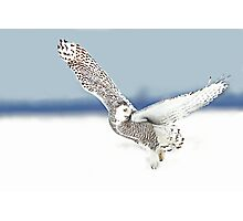 A goodbye look - Snowy Owl Photographic Print