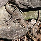 Anolis Carolinensis Lizards by JeffeeArt4u