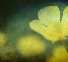Buttercup II by Alan Wright