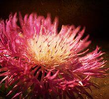*rosey dew* by funkymarmalade