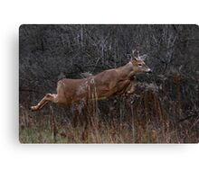 Into the Woods - White-tailed Deer Canvas Print