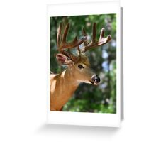 As smooth as velvet - White-tailed Deer Greeting Card