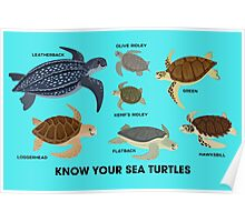Know Your Sea Turtles Poster