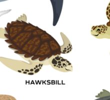 Know Your Sea Turtles Sticker