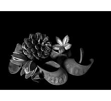 Still life - seed pods - pinhole image Photographic Print