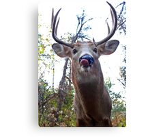 Hello down there - White-tailed Deer Canvas Print
