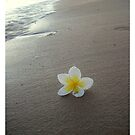 Beach Line by Melissa Park