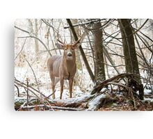 Edge of the Woods - White-tailed buck Canvas Print