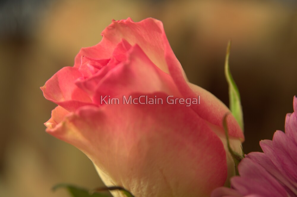Soft Pink and White Rose, As Is by Kim McClain Gregal