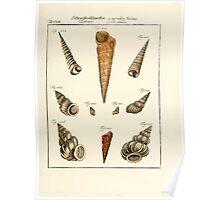 Neues systematisches Conchylien-Cabinet - 256 Poster