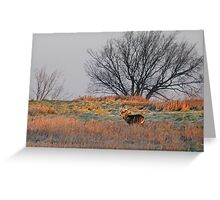 Painted Hill - White-tailed deer Greeting Card
