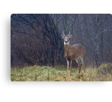 Young Buck in Snow Metal Print