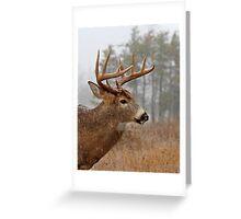 Bullet Buck - White-tailed deer Greeting Card