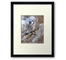 The Inquiring Blue J Framed Print