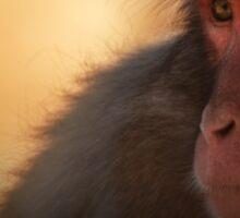 Monkeys Rock Sticker