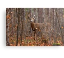 In the Stillness of the Woods - White-tailed Deer Metal Print