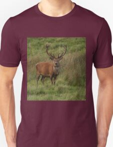 Stag Night? T-Shirt