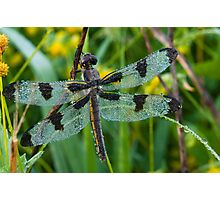 Large Dragonfly Photographic Print