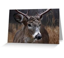 Light from Above - White-tailed deer Greeting Card