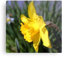 Daffodil Yellow Metal Print