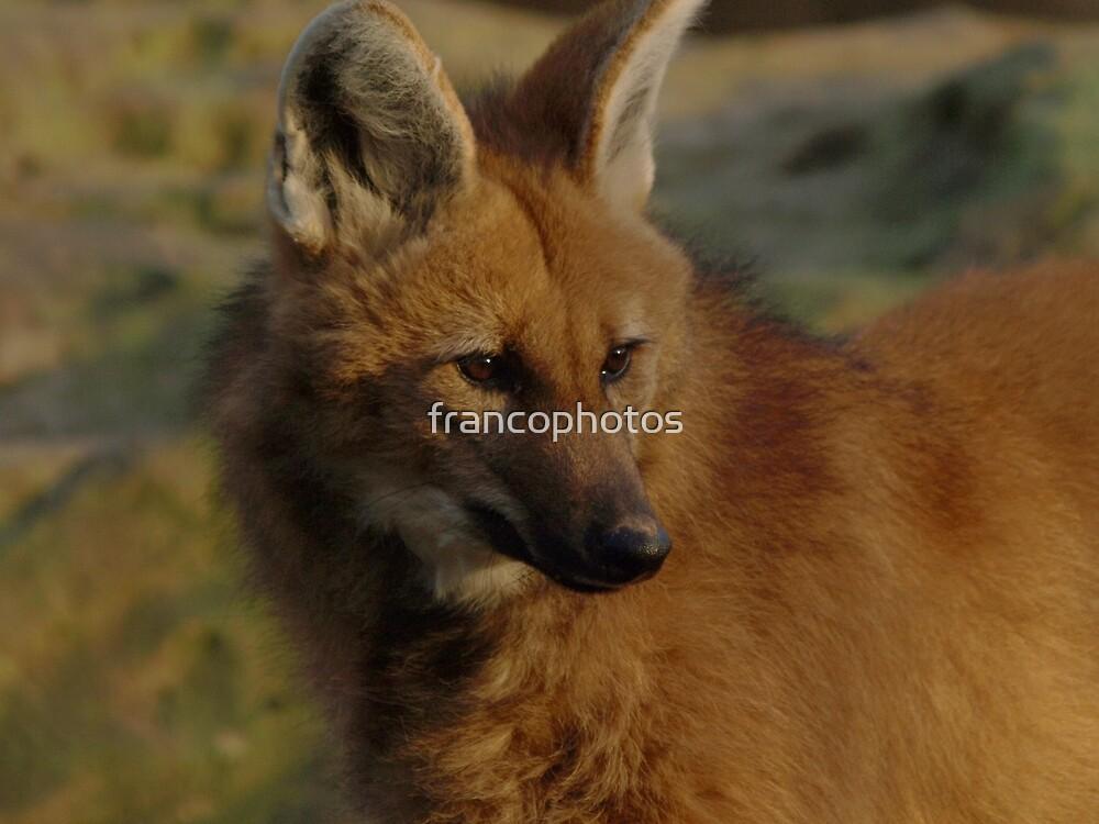 Maned Wolf by Franco De Luca Calce