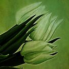 Green Tulips by Priska Wettstein