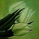 Green Tulips by Priska Wettstein