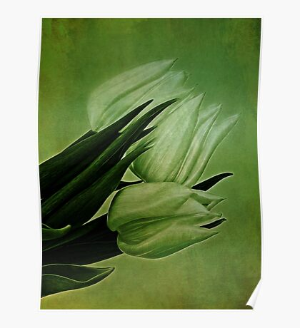 Green Tulips Poster