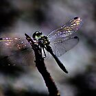Wings & Colours by NaturesEarth