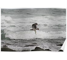Osprey Dive Sequence - Take away dinner (6 of 6) Poster