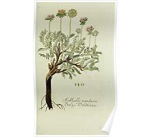 Plantarum Indigenarum et Exoticarum - Lukas Hochenleitter und Kompagnie 1788 - 427 Poster