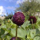 Dewdrop on a Flower by Mark Chandler