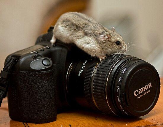 I love my Canon by Ray Clarke