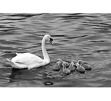 Ugly Ducklings Photographic Print