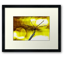 Dragonfly on a twig Framed Print