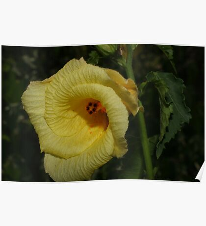 Large yellow flower Poster