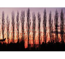 Winter Evening Sky Photographic Print