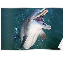 Wild Dolphin fun Poster