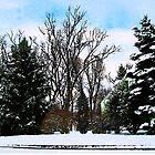 Trees in Snow by Susan Savad
