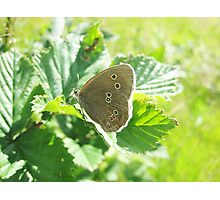 A Butterfly In The Sunshine Photographic Print