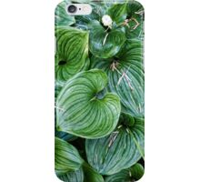 False Lily of the Valley iPhone Case/Skin