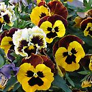 A Flock of Pansies by art2plunder